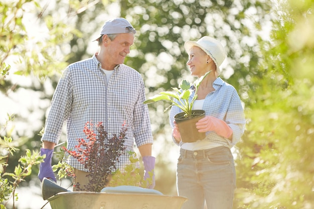 Senior boeren in zonlicht