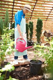 Senior gardener watering plants