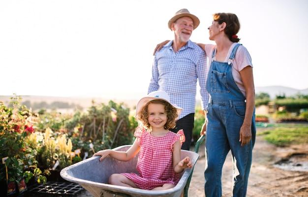 Senior grootouders duwen kleindochter in kruiwagen bij het tuinieren in tuincentrum.