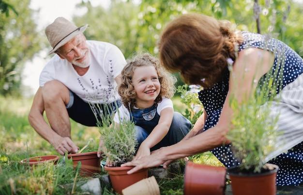 Senior grootouders en kleindochter tuinieren in de achtertuin. man, vrouw en een klein meisje aan het werk.