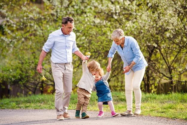 Senior grootouders met peuter kleinkinderen wandelen in de natuur in het voorjaar, hand in hand.