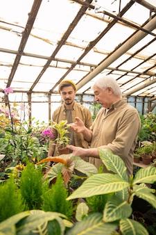 Senior man bladeren van ziekelijke planten tonen en jonge werknemer uitleggen hoe bladeren van pesticiden te spuiten
