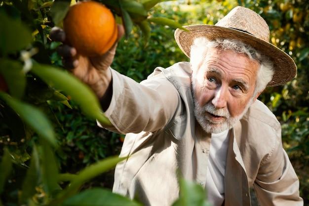 Senior man in sinaasappelbomen plantage