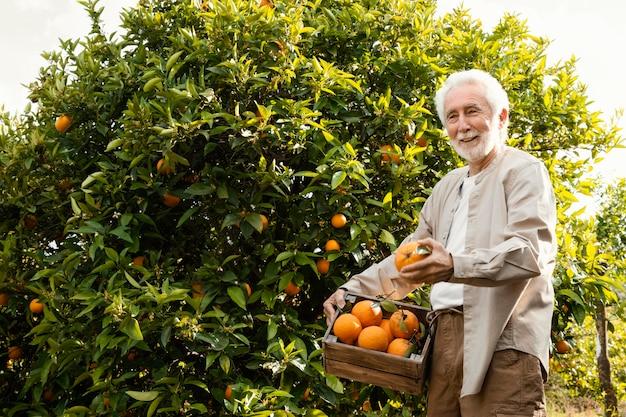 Senior man sinaasappelen cultiveren