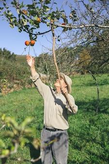Senior man verse biologische appels plukken uit de boom met een houten stok in een zonnige herfstdag. grootouders en kleinkinderen vrije tijd concept.