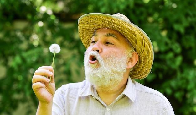 Senior man waait paardebloem zaden in park. oudere man in stro zomerhoed. begrip geheugenverlies. concept van kaalheid en haaruitval. gelukkig en zorgeloos pensioen. opa boer.