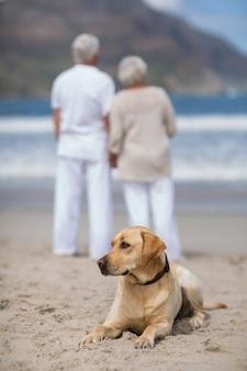 Senior paar staande op het strand met hond