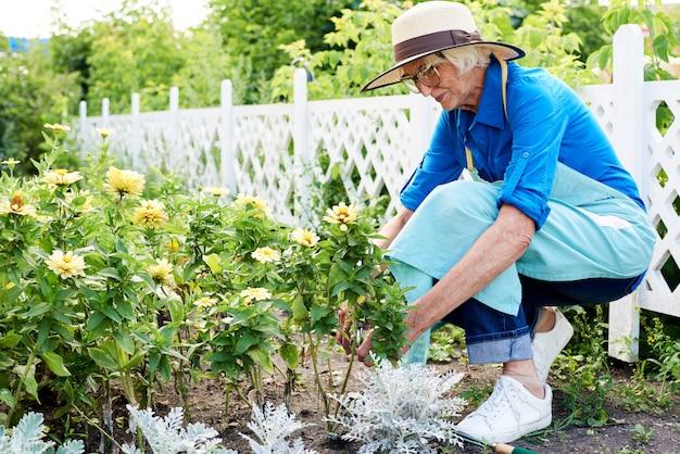 Senior tuinman planten van bloemen