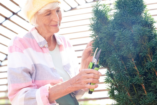 Senior tuinman snijden struiken