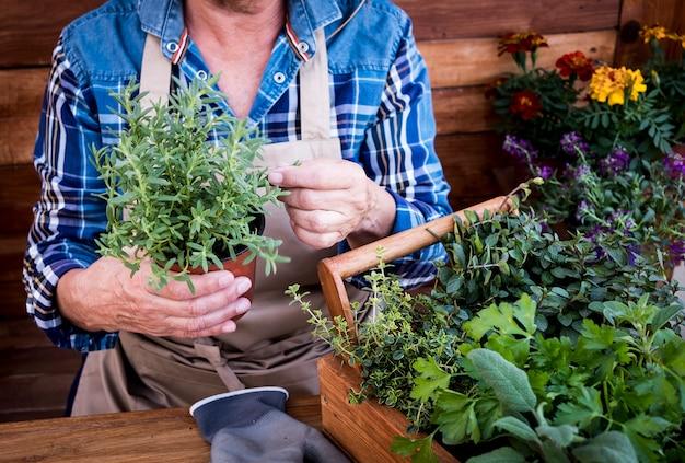 Senior vrouw genieten van tuinieren met planten en kruiden. actief gepensioneerd ouderenconcept. houten rustieke achtergrond en tafel
