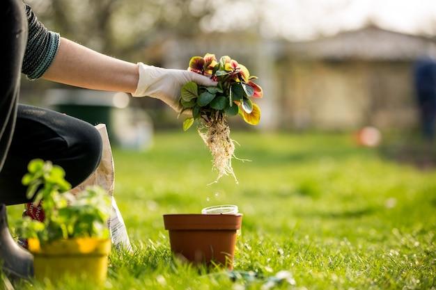 Senior vrouw sommige bloemen overplanten naar een pot, tuinieren concept