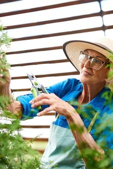 Senior vrouw zorg voor planten