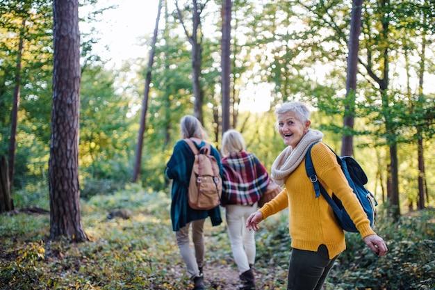 Senior vrouwen vrienden met mand wandelen buiten in het bos.