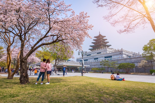 Seoul - 10 april 2016: gyeongbokgung-paleis met cherry blossom in spring travel of korea, 10 april 2016 in seoul, zuid-korea.
