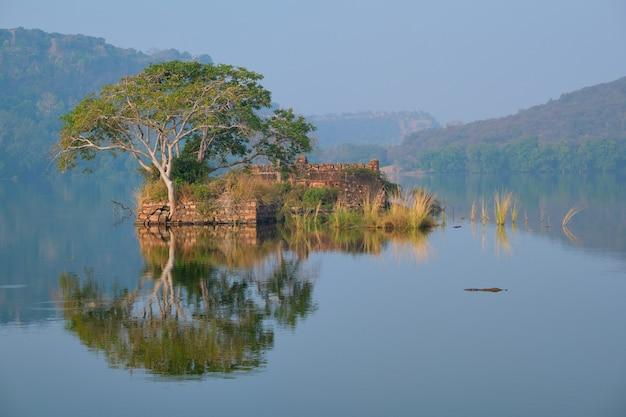Serene ochtend op meer padma talao ranthambore nationaal park rajasthan india