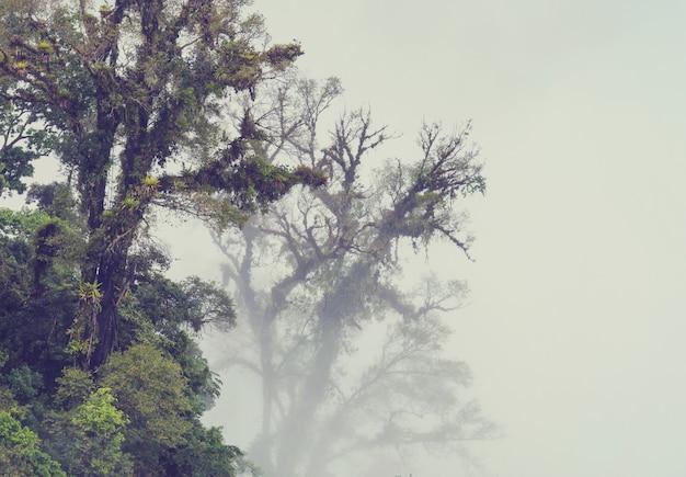 Sereniteit nevelwoud in costa rica