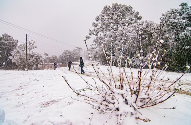Serra de santa catarina, zuidelijke regio van brazilië, een van de grootste sneeuwfenomenen ooit in zijn geschiedenis.
