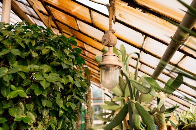 Serre in botanische tuin