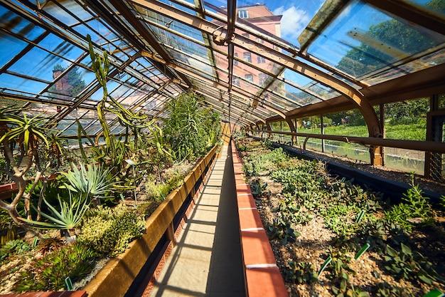 Serre in de botanische tuin van de universiteit, wroclaw, polen. de tuin is gebouwd op het kathedraaleiland (ostrow tumski)