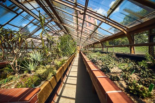 Serre in de botanische tuin van de universiteit, wroclaw, polen.