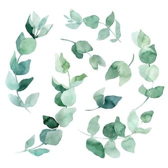 Set aquarel illustraties eucalyptus tak. elementen voor het maken van huwelijksuitnodigingen en kaarten in eco-stijl.