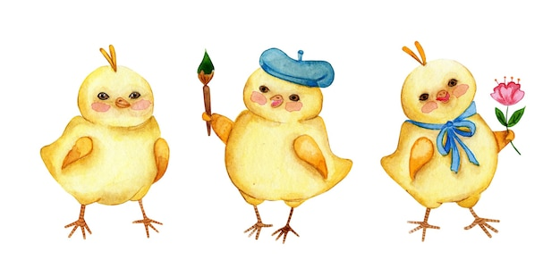 Set aquarel illustraties van kleine schattige gele kippen. haankunstenaar, kuiken met een bloem. pasen, religie, tradities. geïsoleerd op witte achtergrond. met de hand getekend.
