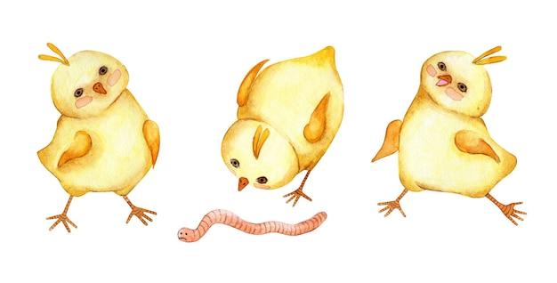 Set aquarelillustraties van kleine schattige gele kippen die de haan rent