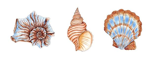 Set aquarelillustraties van prachtige schelpen in beige en blauwe kleuren onderwaterwereld