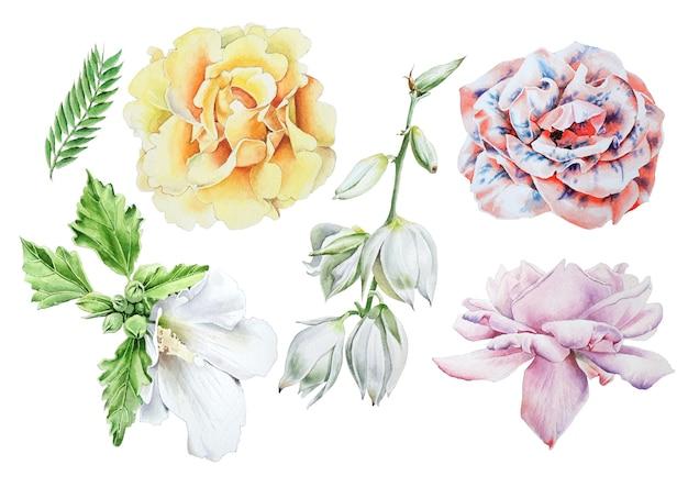Set met aquarel bloemen. roos. kaasjeskruid. yucca. hand getekend.