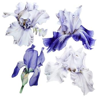 Set met aquarel irissen. hand getekend.
