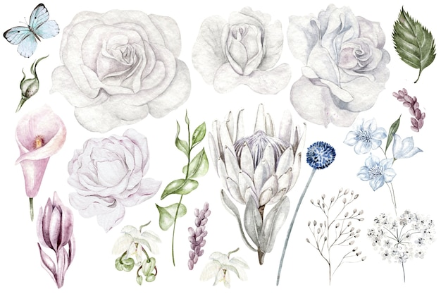 Set van aquarel bloemen en takken wilde bloemen op witte achtergrond