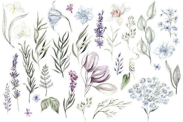Set van aquarel kruiden en takken wilde bloemen op witte achtergrond