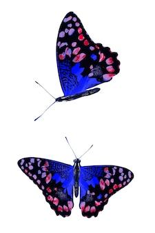 Set van blauwe vlinders geïsoleerd op een witte achtergrond. hoge kwaliteit foto