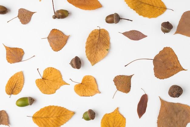 Set van gele gevallen bladeren en eikels