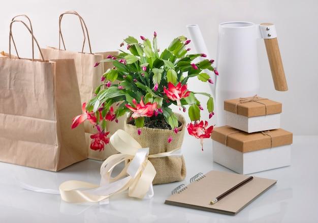 Set van kerst bloem zigokaktus, notebook, geschenkdozen en papieren zakken. nul west