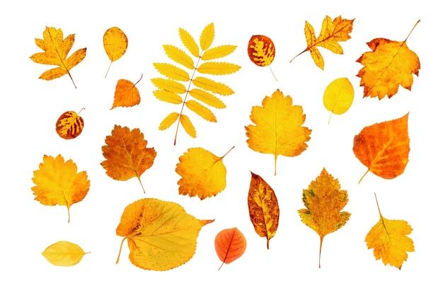 Set van natuurlijke herfstbladeren geïsoleerd op een witte achtergrond. bovenaanzicht.