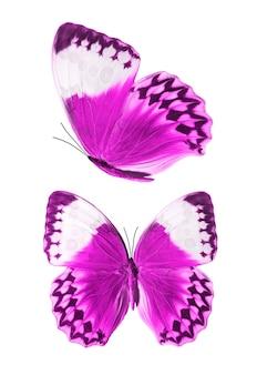 Set van paarse vlinders geïsoleerd op een witte achtergrond. hoge kwaliteit foto