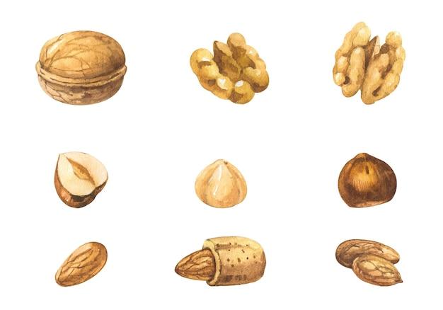 Set van verschillende aquarel noten op witte achtergrond