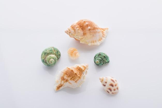 Set van verschillende weekdier shells geïsoleerd op een witte achtergrond