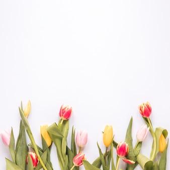 Set van verse heldere tulpen met groene bladeren