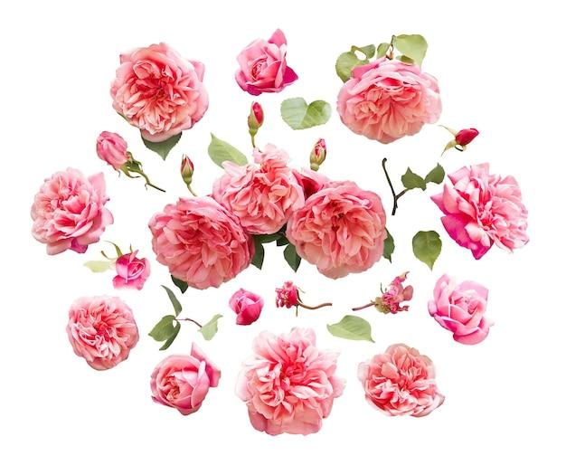 Set van verse roze bloemen en groene bladeren geïsoleerd op een witte achtergrond. decoratieve ontwerpelementen