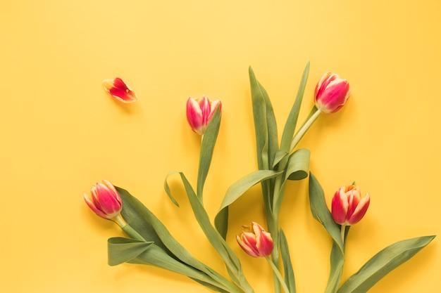 Set van verse tulpen met groene bladeren
