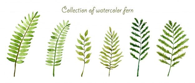 Set van verzameling aquarel fern