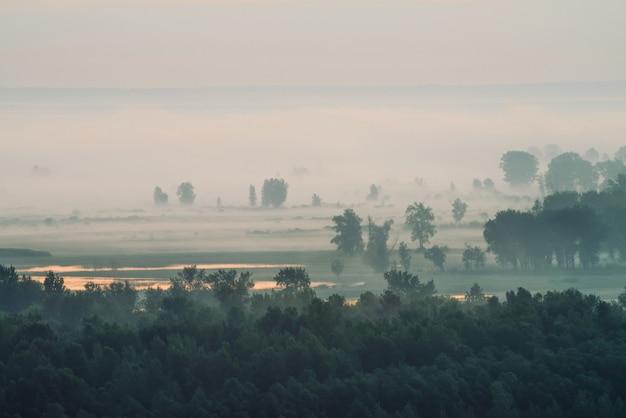 Sfeervol landschap met bos in de mist bij zonsopgang