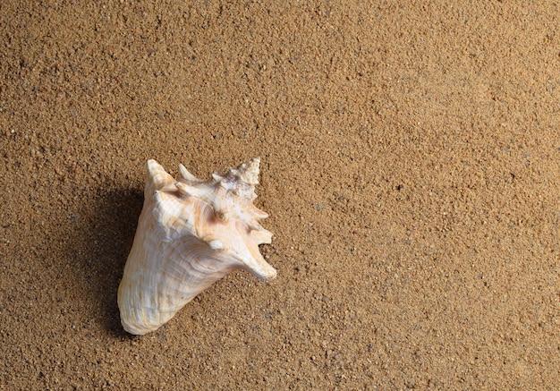 Shell in het zand. het concept van rust op het strandseizoen is open! bovenaanzicht