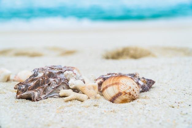Shell op zandstrand met wazig blauwe zee