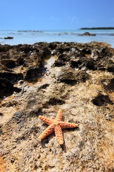 Shell sea star op een caribische kustlijn