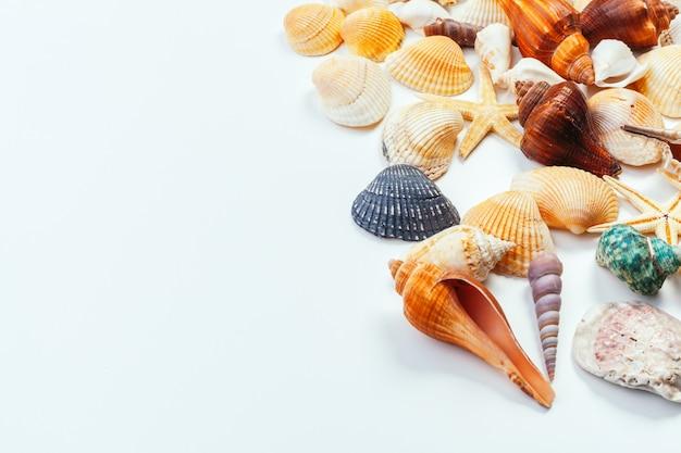 Shells geïsoleerd