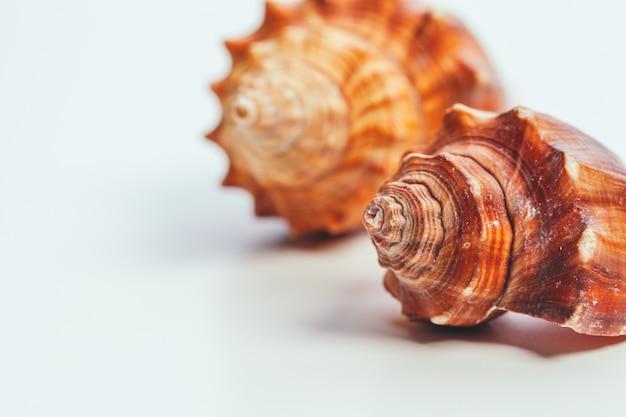 Shells op wit wordt geïsoleerd dat