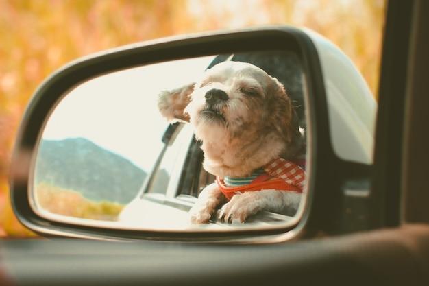 Shihtzu-hond in autospiegel die uit venster tijdens reisreis kijken